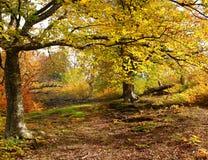 Fog in autumn beech forest. Crimea. Ukraine stock image