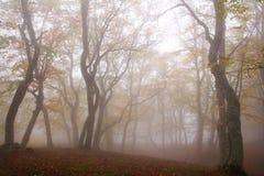 Fog in autumn beech forest. Crimea Stock Photos