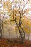 Fog in autumn beech forest. Crimea. Ukraine stock photography
