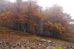 Fog in autumn beech forest. Crimea. Ukraine stock photo