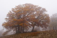 Fog in autumn beech forest. Crimea Royalty Free Stock Photography