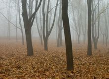 Fog in the autumn forest Stock Photography
