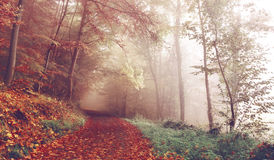 Fog in autumn forest Royalty Free Stock Photo