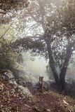 Fog in the autumn forest. Foggy path in the autumnal forest Royalty Free Stock Images