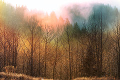 Fog in autumn forest Royalty Free Stock Images