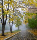 Fog in autumn park Royalty Free Stock Image