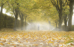 Fog in autumn park. Autumn alley with fallen leaves and mist. Fog in autumn park Stock Photography