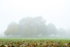 Fog in autumn park. Nature background Stock Images