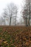 Fog in autumn season Stock Image
