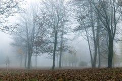 Fog in autumn season Royalty Free Stock Images