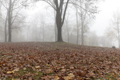 Fog in autumn season Royalty Free Stock Photography
