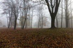 Fog in autumn season Stock Photography