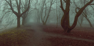 Fog background mistycal park alley autumn trees fall foliage Royalty Free Stock Photos