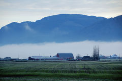 Fog Bank in a Rural Valley Stock Image