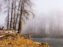 Fog on the banks of Snoqualmie river. Autumn trees in fog on the banks of Snoqualmie river - near the town of Carnation, WA, USA Stock Photo