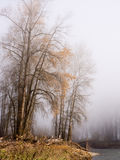 Fog on the banks of Snoqualmie river Royalty Free Stock Photo