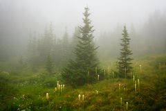 Fog and Beargrass Royalty Free Stock Image