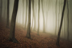 Fog in a beautiful forest with fog in autumn after rain Stock Photos