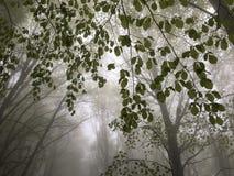 Fog in a beech forest Stock Photos