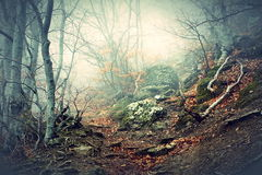 Fog in beech forest in  mountains Royalty Free Stock Photos