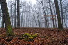 Fog in the Beech Forest in Winter Time stock photo