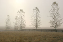 Fog behind the trees. A row of trees and a fence line sit in front of the fog Royalty Free Stock Image