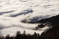 Fog in black forest, Germany Royalty Free Stock Photos
