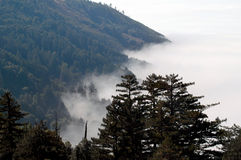 Fog Blanket Stock Image