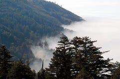 Fog Blanket. Fog on Californian coast - with redwoods Stock Image