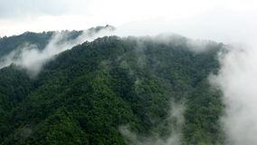 Fog blowing over the green mountains with pine tree forest.  stock footage