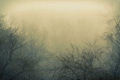 Fog and branches of trees Stock Photography