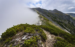 Fog in Calimani Mountains Stock Images
