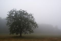 Fog in chianti Royalty Free Stock Images