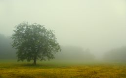 Fog in chianti. Tree isolated by the heavy fog in Chianti stock images