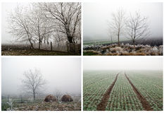 Fog Stock Images