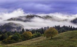 fog and colored trees - autumn in Slovakia Stock Photo