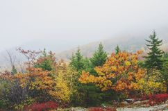 Fog and colorful trees at Autumn in Acadia National Park royalty free stock image