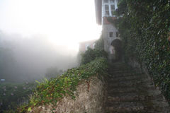 The fog comes to the garden. Stock Image