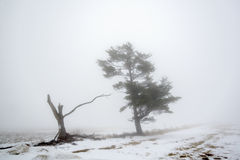 Fog in the Country Royalty Free Stock Photography