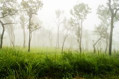 Fog cover the mountain forest royalty free stock photos