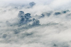 The fog covered the forest at Pha Mo I Daeng Cliff Royalty Free Stock Images
