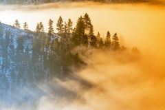 Fog coveres a forest of trees in the morning sunrise. Morning light in the fog covering a forest Royalty Free Stock Photos
