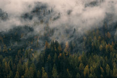 Fog covering autumn forest