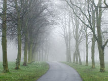 Fog covering a road in a park Stock Photo