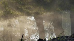 The fog crawls along the water. Reflections of trees. stock video footage