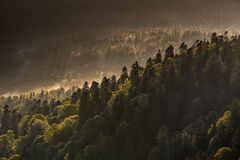 Fog creeping along the slope of the mountains in autumn overcast Royalty Free Stock Images