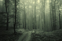 Fog in the dark forest. Mysterious atmosphere in a foggy forest Royalty Free Stock Image