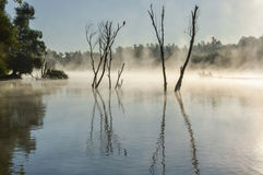 Fog in the delta in a summer day. Delta Dunarii - The Danube Delta is the second largest delta in Europe, after the Volga Delta, and is the best preserved on the Royalty Free Stock Photography