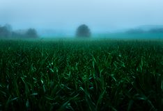 In the fog royalty free stock images
