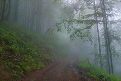 In the fog Royalty Free Stock Photography